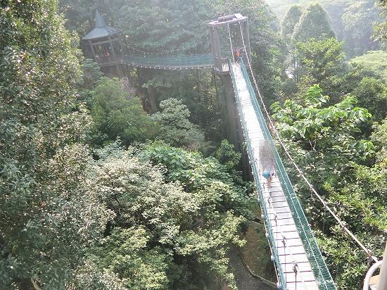 キャノピーウォーク吊り橋