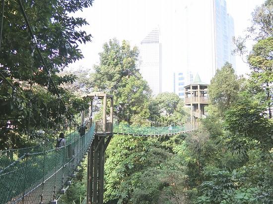 キャノピーウォーク吊り橋2