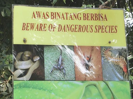 危険な動物