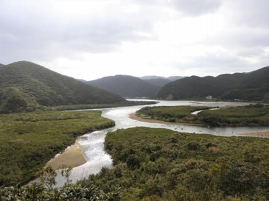 マングローブ原生林奄美大島