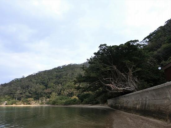 浜辺からの西原ガジュマルの樹