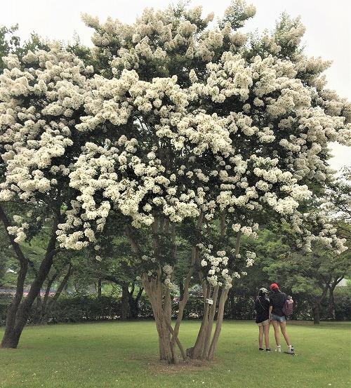 景福宮にある大きな木と花