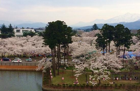 高田城桜まつりお城から
