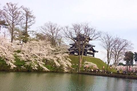 高田城桜まつりお堀とお城