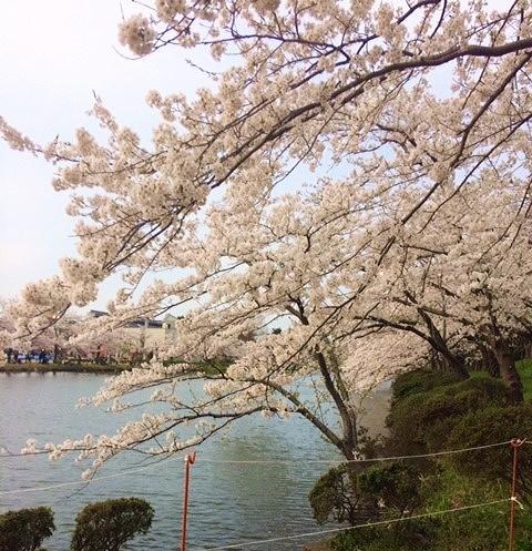 高田城桜まつり