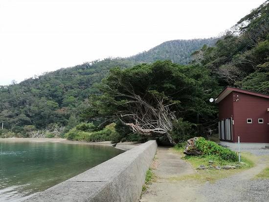 遠くに見える西原のガジュマルの樹