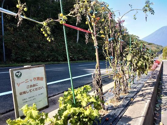 喜茂別町相川パーキング菜園