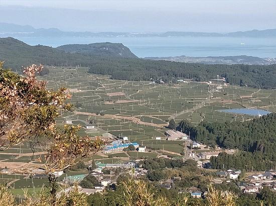 茶畑 大野岳