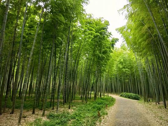 若山農場 若竹の森